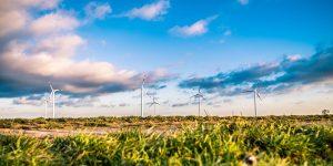 Windräder hinter einem Feld